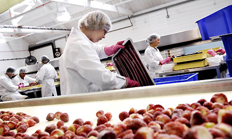 Food Production Picture 1